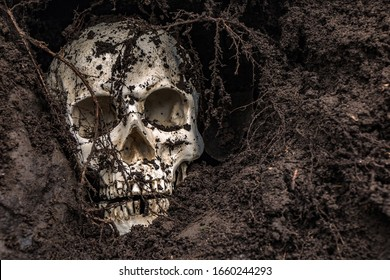 Human skull in hole in soil. Abandoned skull excavated in ground with roots.
