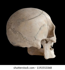 Human skull isolated on black, close-up. Back view.