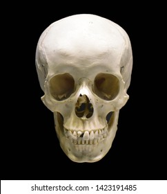 Human skull isolated on black background. Anatomically correct human skull model with creepy details for horror artwork or halloween decoration. Dead people bone cranium.