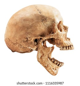 Human skull isolated on white background with clipping path