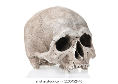 Human skull isolated on white background with reflection.