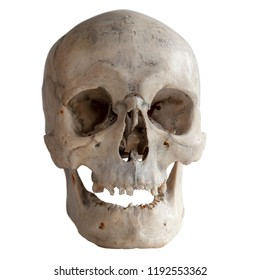 Human skull isolated on white, close-up.