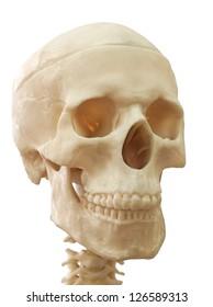 human skull, isolated on white.