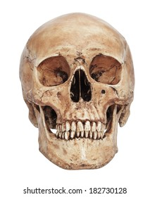 Human skull model isolated on white background with working path