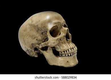 Human Skull  on black background.