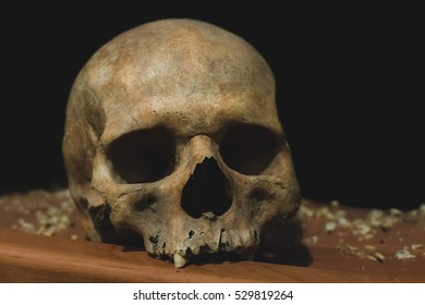 human skull on a dark backraund
