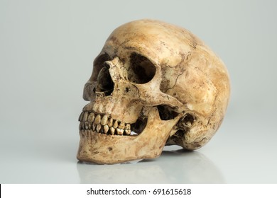 Human skull on light gray background and reflection on floor.