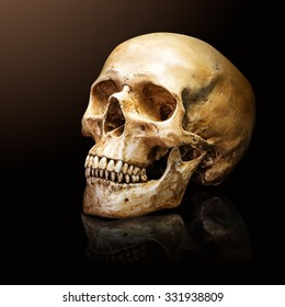 Human skull on the warm and dark background