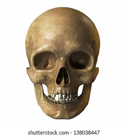 a human skull on a white background
