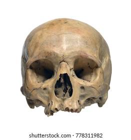 superior quality cfe10 1c41e Human skull on a white background.