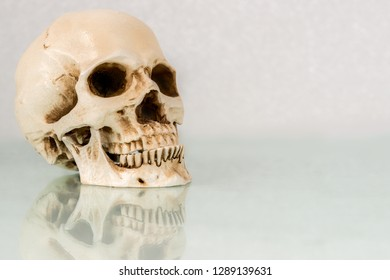 A human skull on a white glass desk. The skull is reflected in the glass. Room for text or to crop.