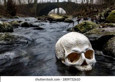 Human skull in water in forest with fog. Abandoned skull among rocks in a autumn brook with ancient stone bridge on background.