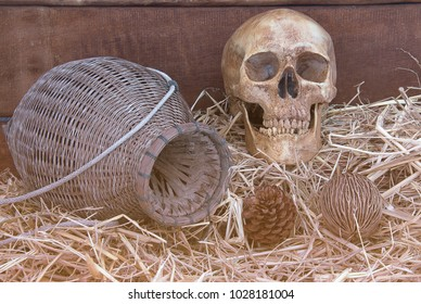 Human skulls in the death of the old barn shed.