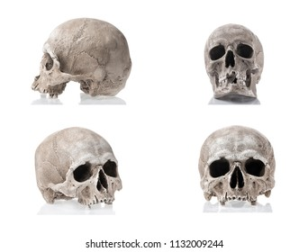 Human skulls isolated on white background with reflections. Side and front views collage set. Anatomy and medicine concept.
