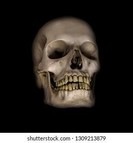 A human skulls on a black background.