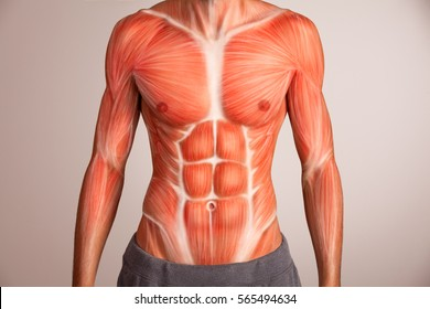 Human torso.