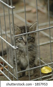 A humane society kitten peering out of a kennel.