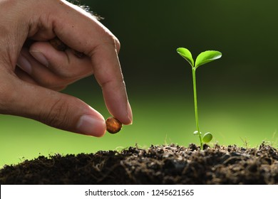 Human's hand planting seeds in soil