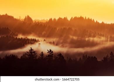 Humboldt County Redwoods, Northern California