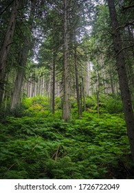 The humid rainforests of Canada