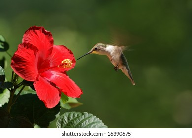 Humming Bird Feeding Landscape