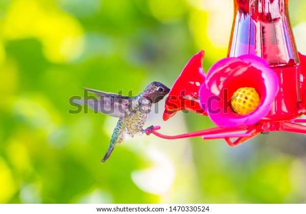 Humming bird feeding macro shot
