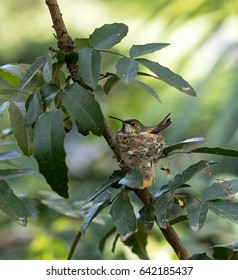 Humming Bird nesting with rays of light