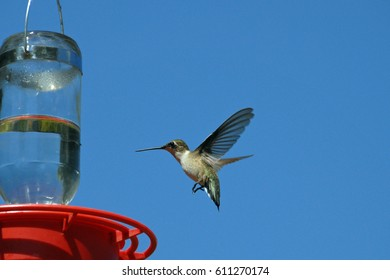 Hummingbird approaching a feeder