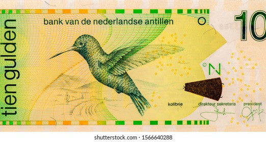 Hummingbird (Colibri) in flight. Landscape with a giant cactus Saguaro. Portrait from Netherlands Antilles 10 Gulden 1994 Banknotes. An Old paper banknote, vintage retro. Famous ancient Banknotes.