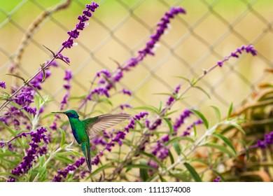 hummingbird in Colombia.