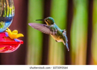 Hummingbird coming to feeder