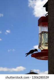 Hummingbird eating seeds