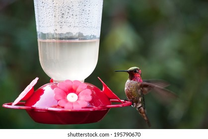 Hummingbird at feeder with blurred wings