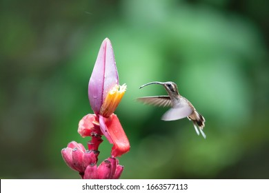 Hummingbird flying to a flower