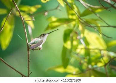 hummingbird found in wild nature on sunny day