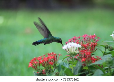 Hummingbird on the flowers