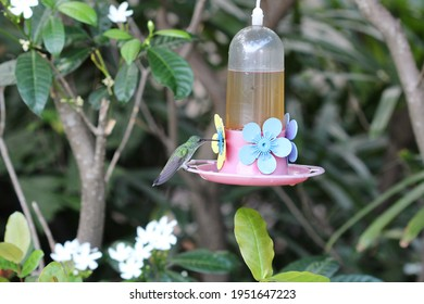 Hummingbird perched on an artificial water fountain to feed on nectar in the middle of the garden.