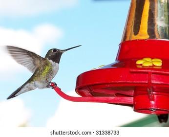 Hummingbird poised at feeder