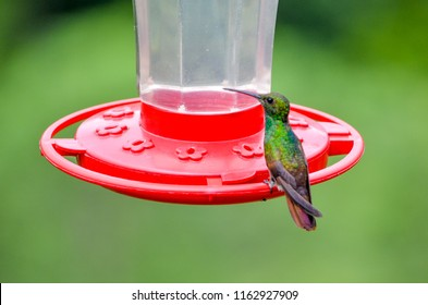 Hummingbirds Flying And Eating From Their Feeder