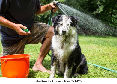 Humorous expression on a muddy dog in that second that the hose water hits