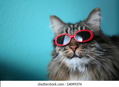 Humorous image of a cat with sunglasses...shallow depth of field