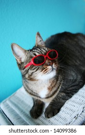 humorous image of a cat in sunglasses...shallow depth of field