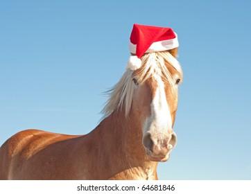 Humorous image of Santa's huge big helper - a blond Belgian Draft horse wearing a santa hat ready to help!