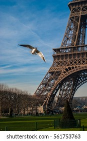 Humorous photobomb of bird with shot of Massive base of Eiffel Tower meeting ground with green grass and blue sky in Paris in background