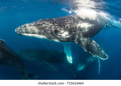 Humpback in the blue