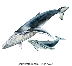 Humpback whale with baby. Underwater fauna. Watercolor illustration. Image. Picture. Template