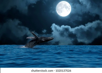 humpback whale breaching at full moon night in pacific ocean background