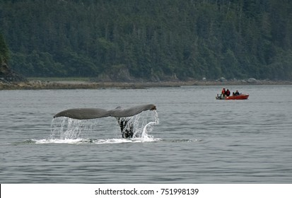 Humpback Whale Fluke Off Coast Of Juneau, Alaska