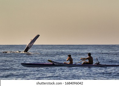 Humpback whale showing off for unidentifiable kayakers.