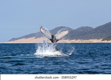 humpback whale south africa